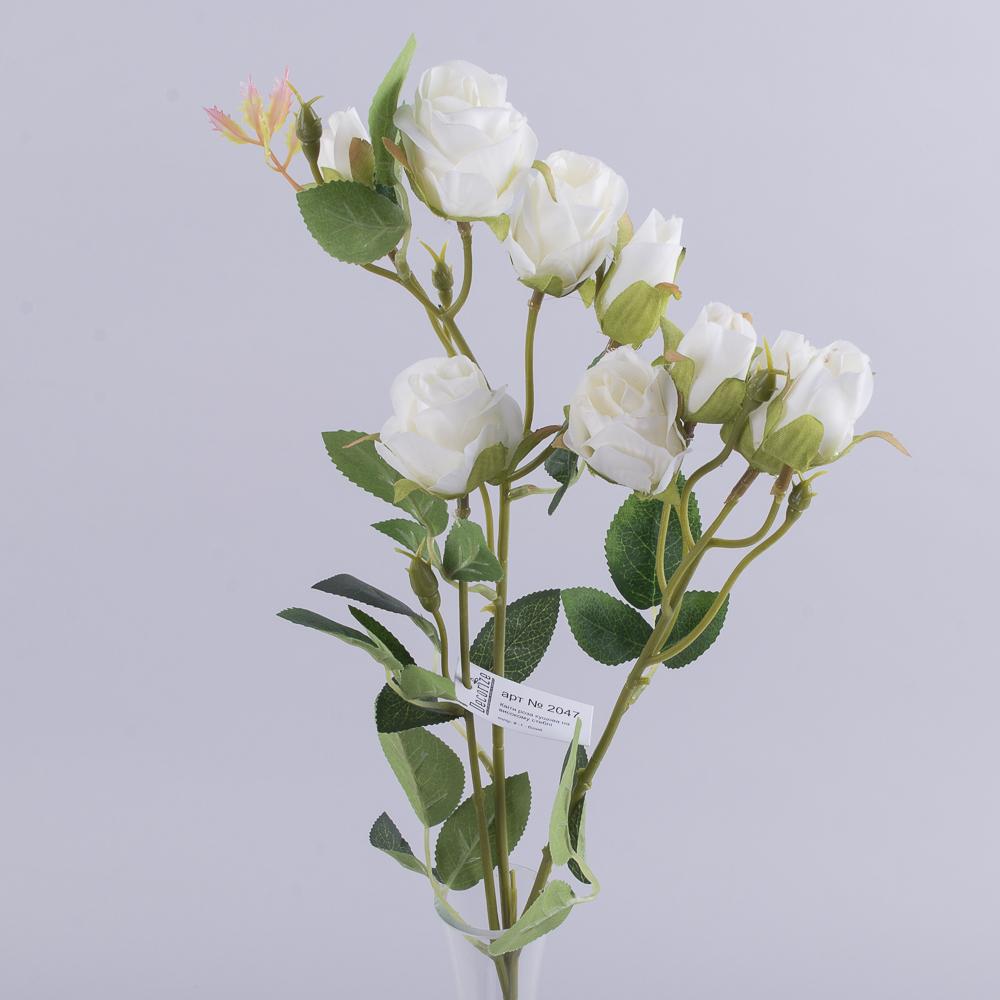 роза кустовая премиум белая
