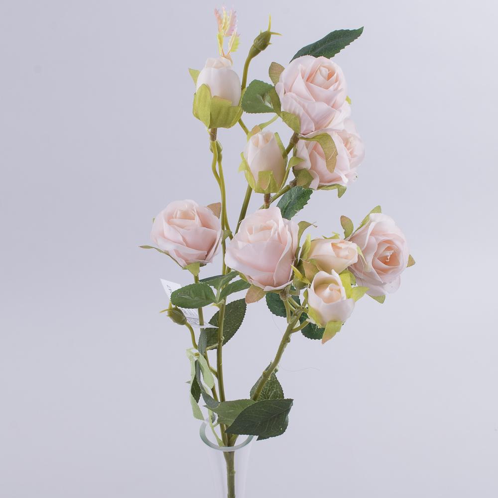 роза кустовая премиум персиковая