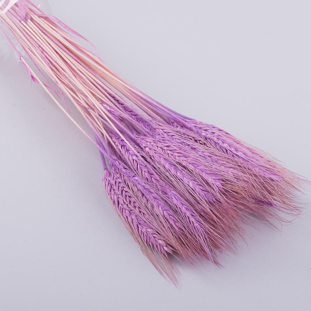 натуральная пшеница сиреневая
