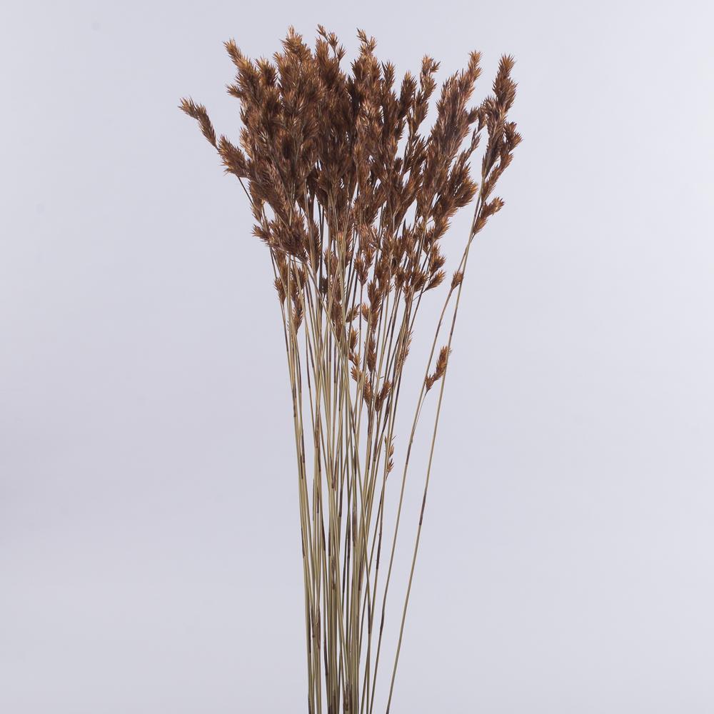 """Сухоцвет """"thathing reed"""""""