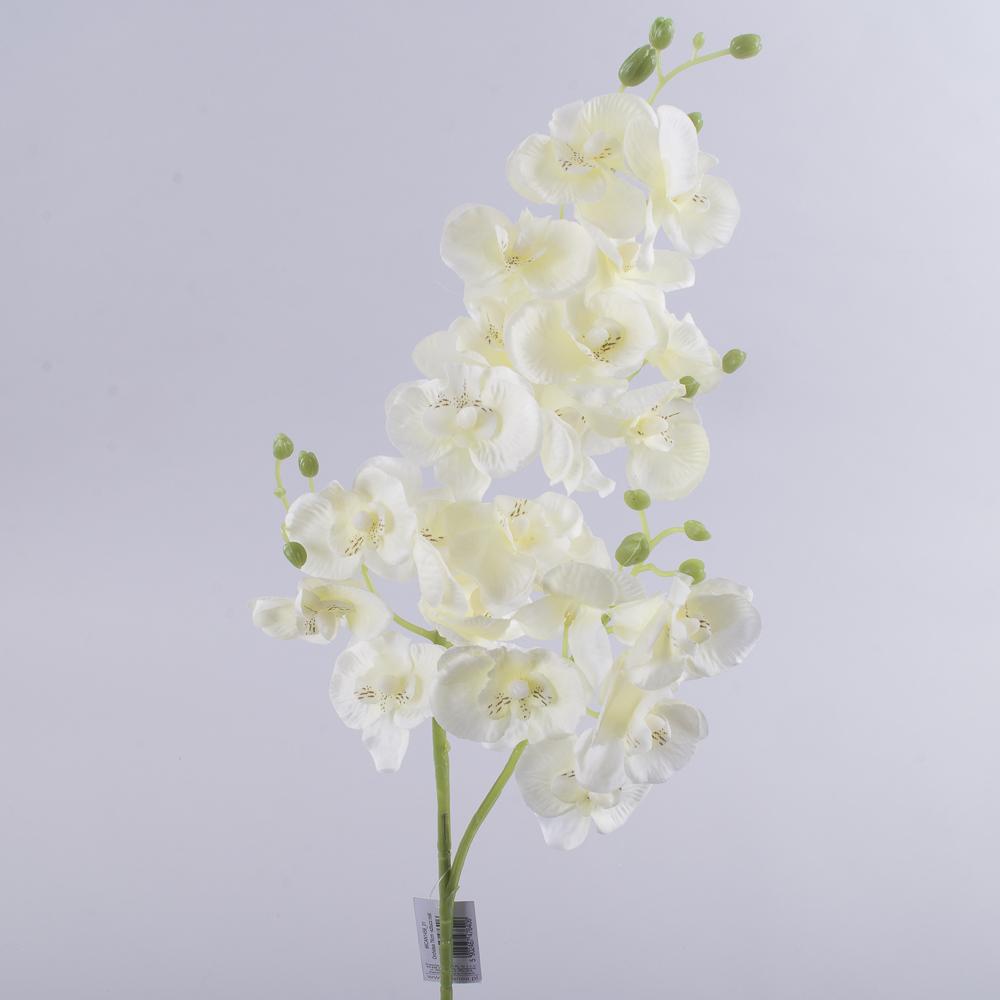 "Орхидея ""мелкоцвет"" молочная"