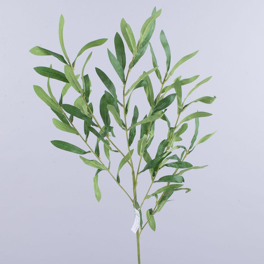 ветка оливы зеленая высокая