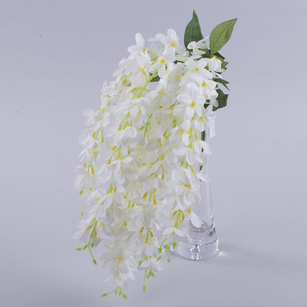 Гліцинія звисаюча біла
