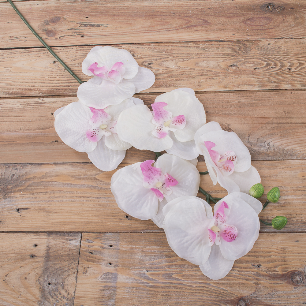 "орхидея ""бабочка"" молочная с розовым"