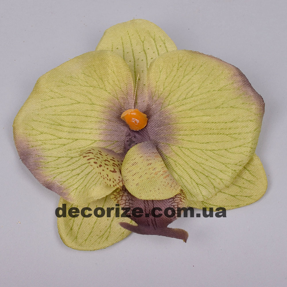 головка орхідеї темно зелена